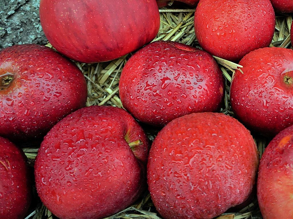 Knackige rote Äpfel.